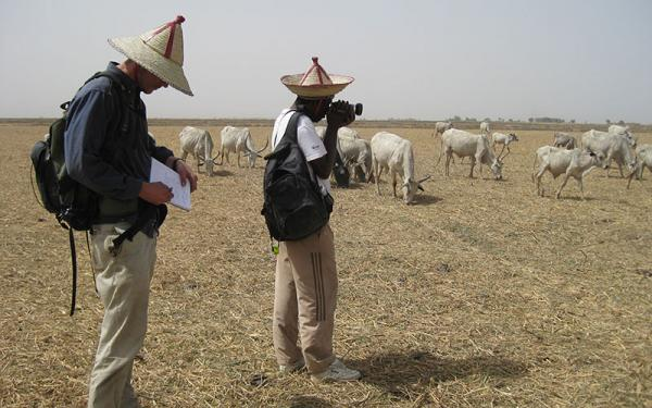 Researchers taking photographs of a cattle herd